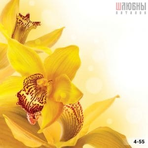 Натяжной потолок цветы 4-55 в Могилеве фото